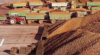 Kartoffelannahme in den 70er und 80er Jahren